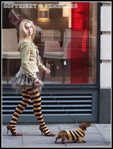 Дама с собачкой)))
