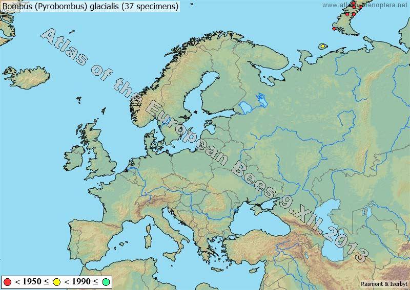 Арктический Шмель Карта